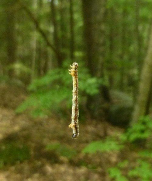 6. Hanging Caterpillar