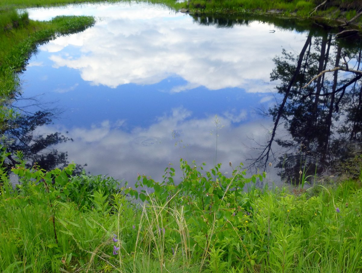 9. Pond Relections