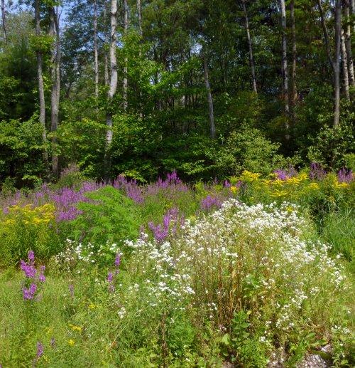 1. Meadow Wildflowers