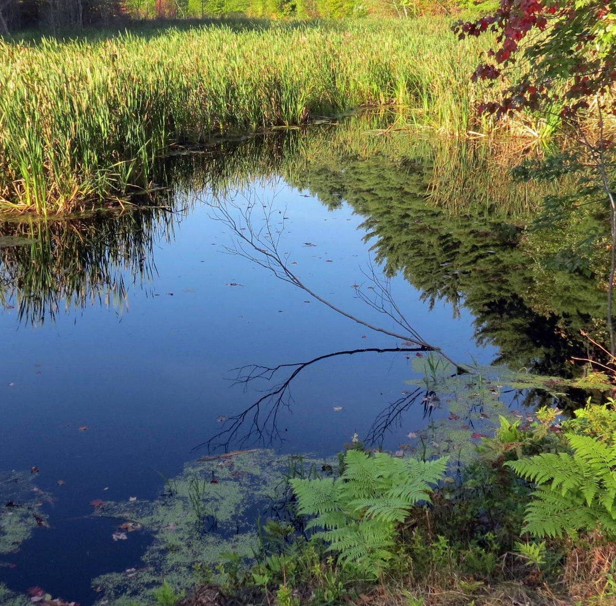 11. Pond