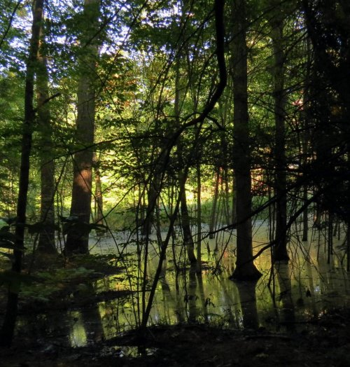 12. Pond from Forest