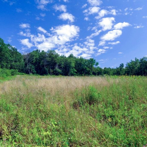 4. High Blue Meadow 2-2