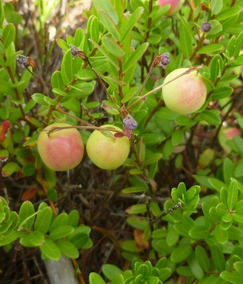 5. Cranberries