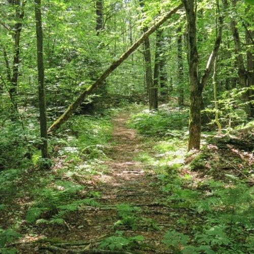 5. High Blue Trail