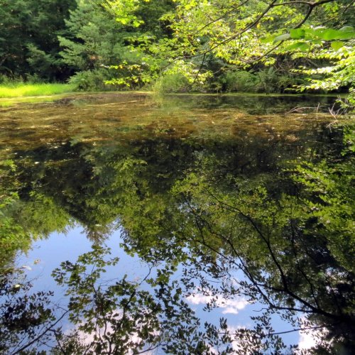7. High Blue Pond