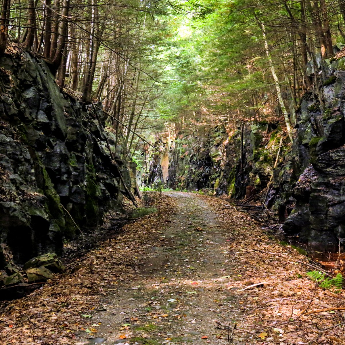 Rail Trail Mysteries | New Hampshire Garden Solutions