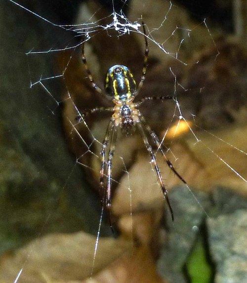 12. Spider