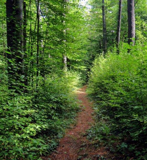 2. Close Trail