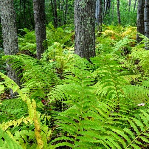 2. Ferns