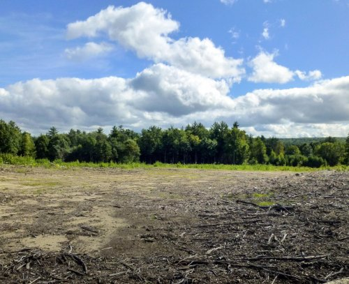 3. Clearcut Forest