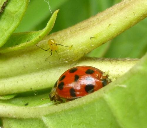 3. Lady Bug