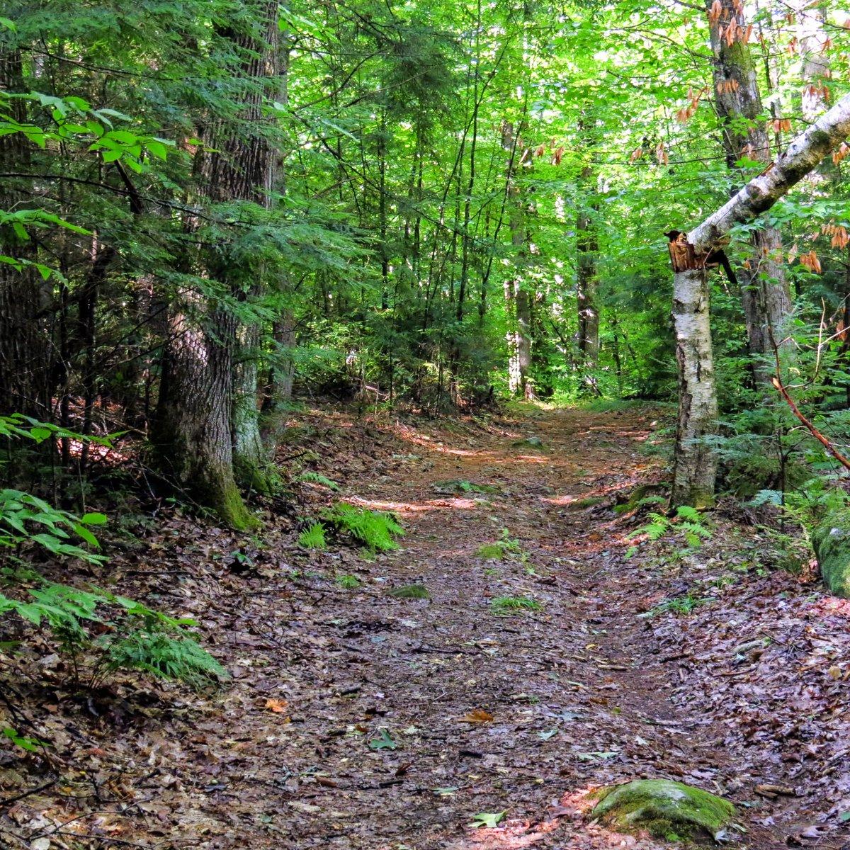 3. Trail Widening