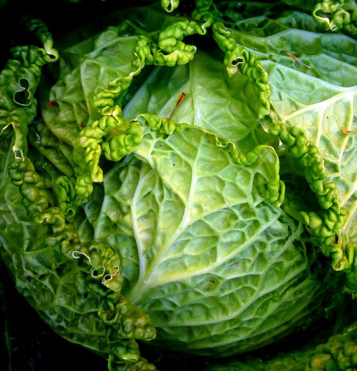 8. Cabbage
