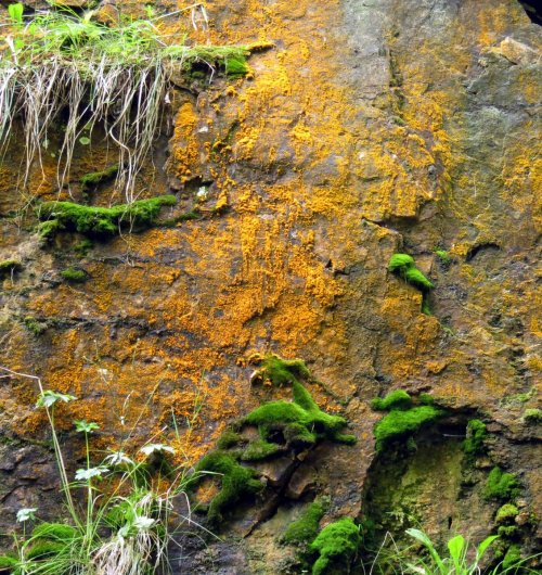 8. Green Algae
