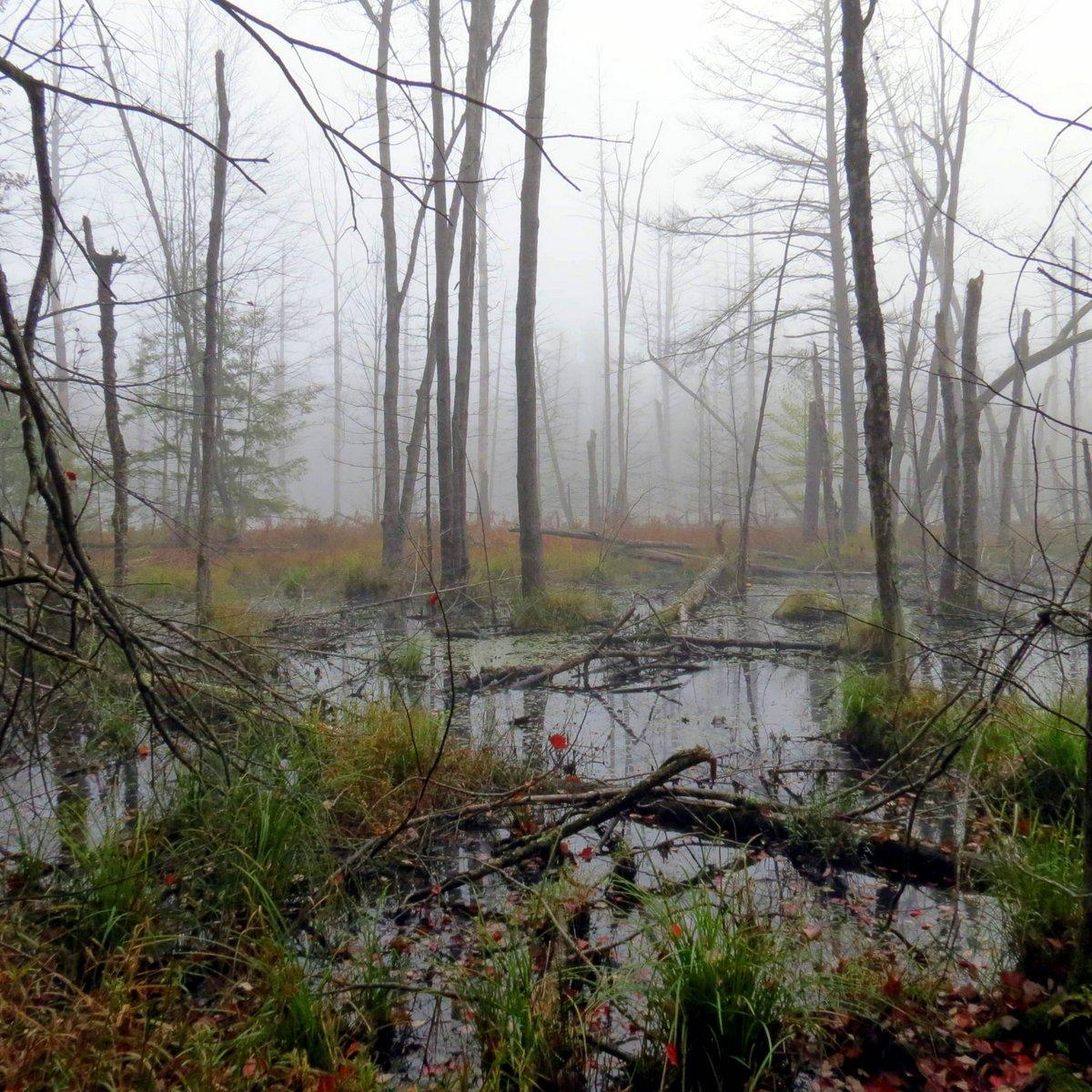 1. Beaver Swamp in Fog