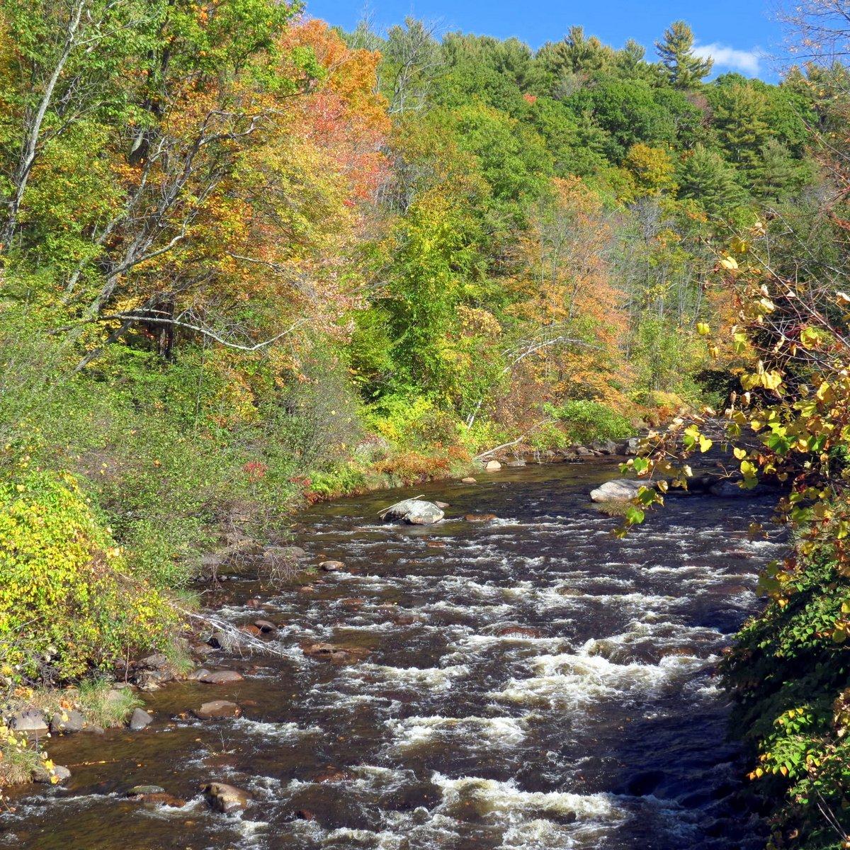1. Branch River Colors