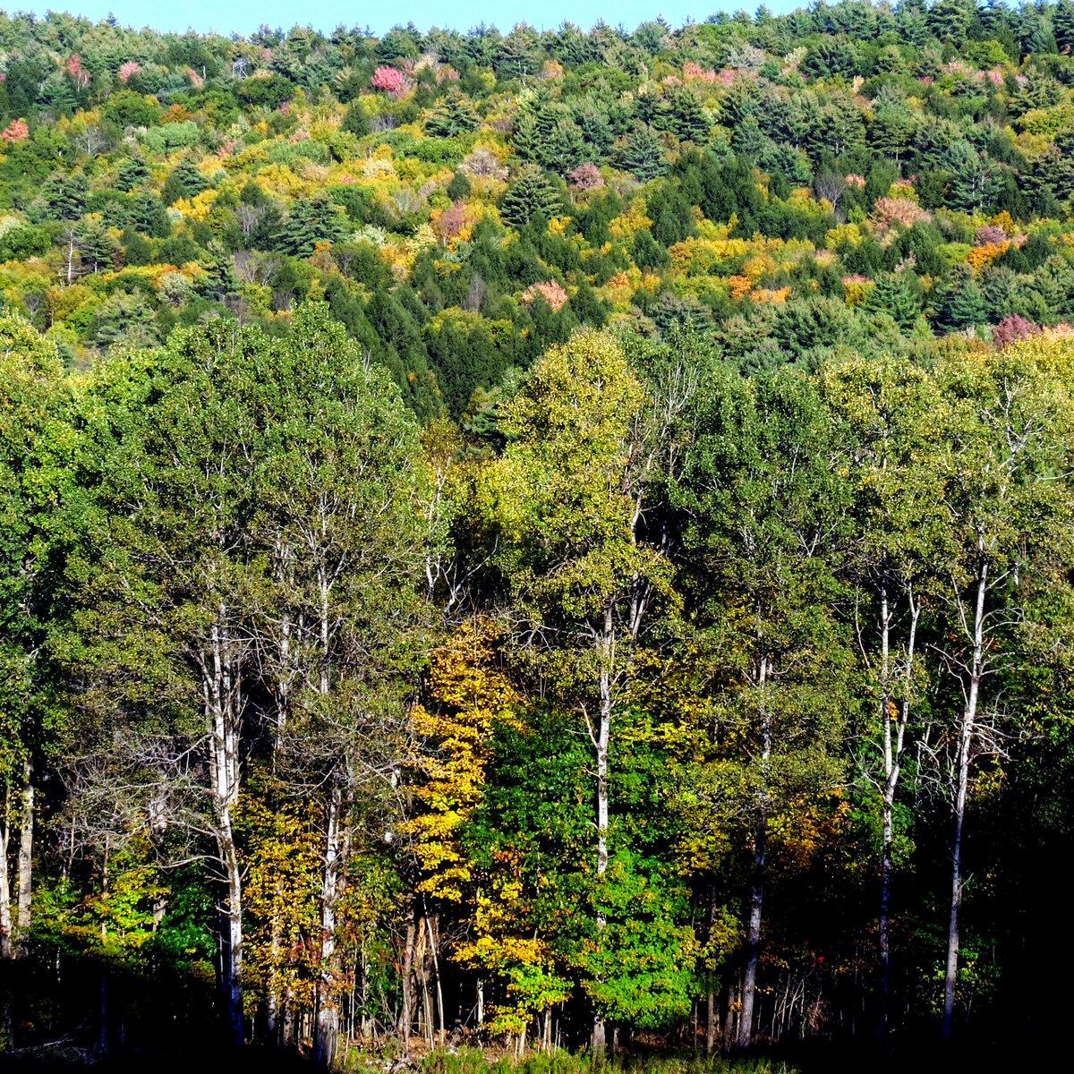 12. Hillside Colors