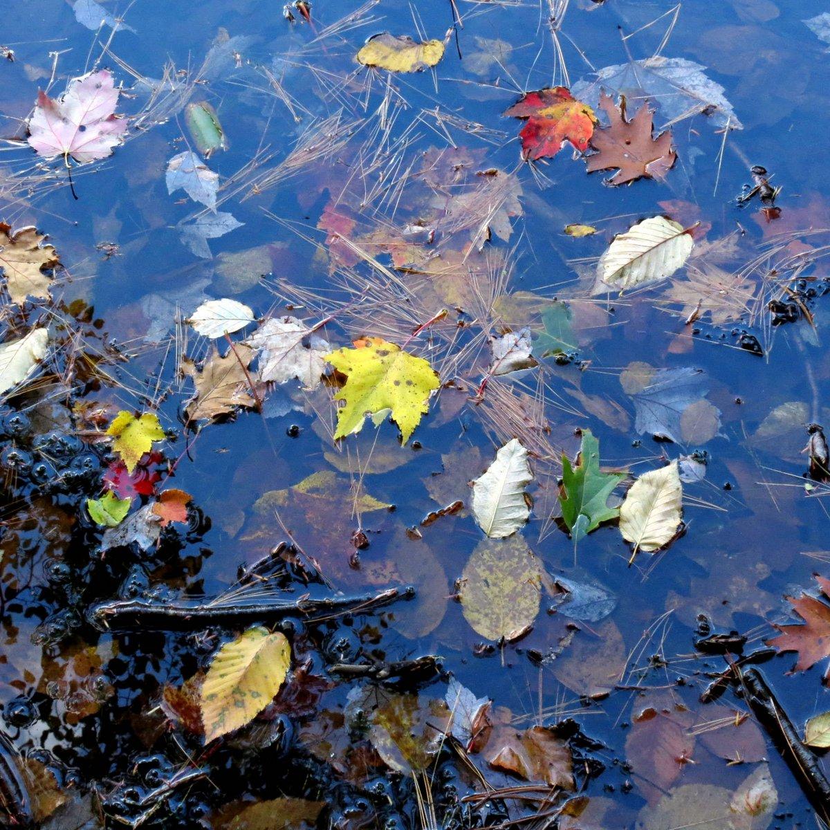 13. Leaves on Water