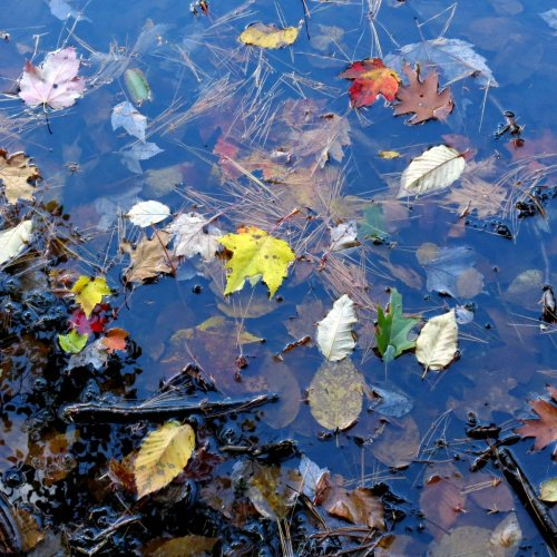 13. Leaves on Water