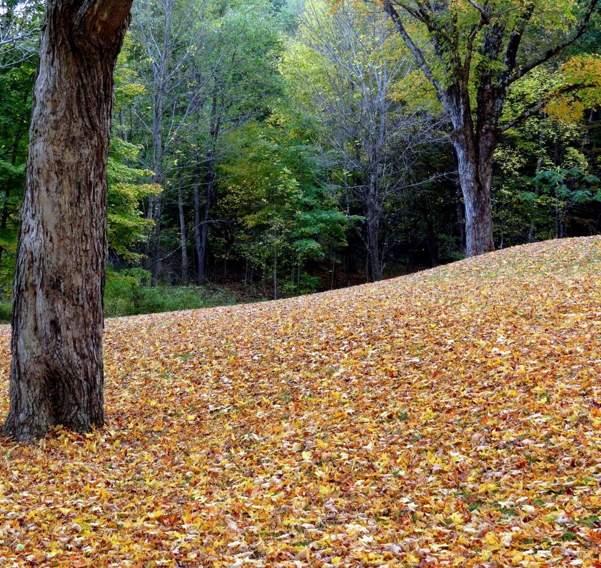 15. Fallen Leaves