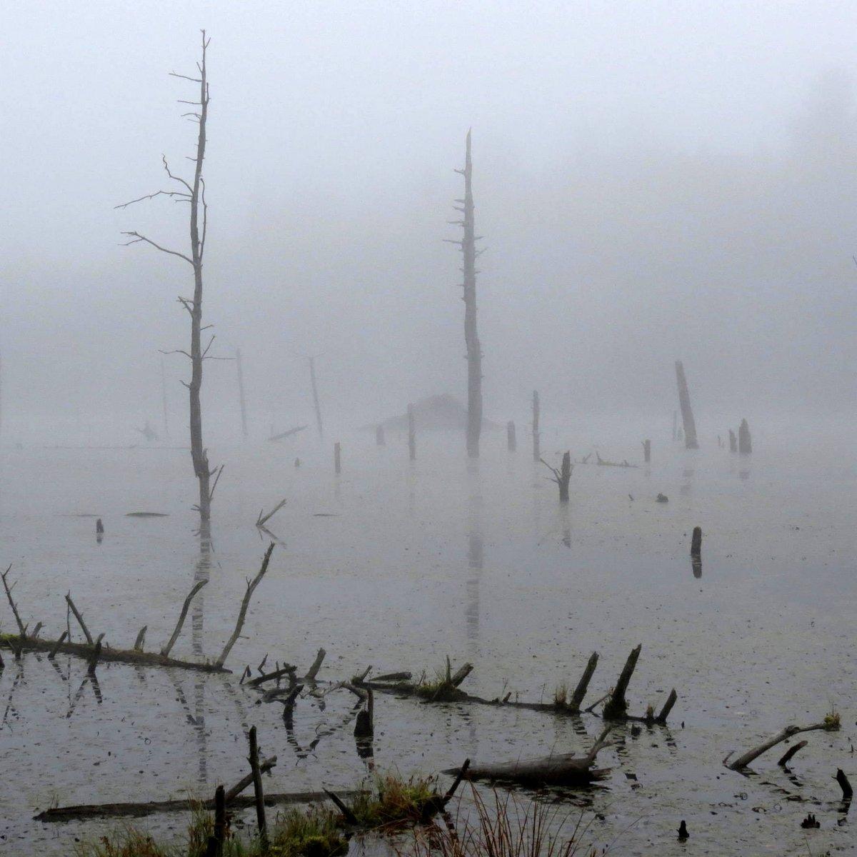 2. Beaver Lodge in Fog