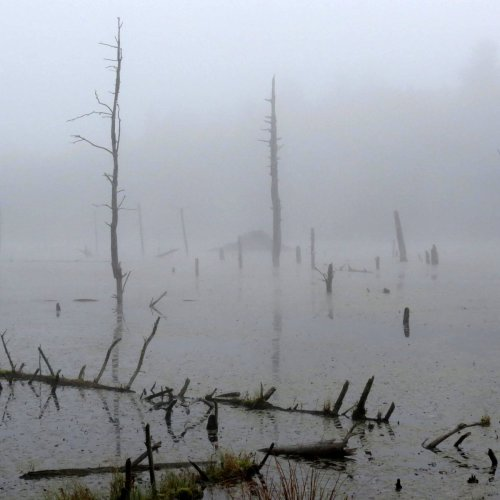 2. Beaver Lodge in Fog