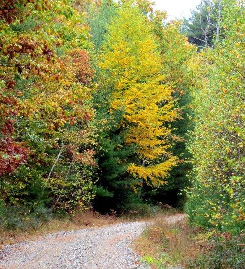 5. Foliage
