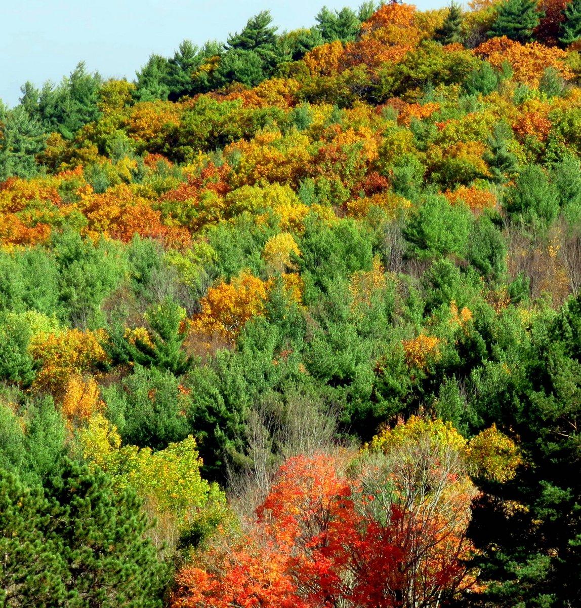 6. Hillside Foliage