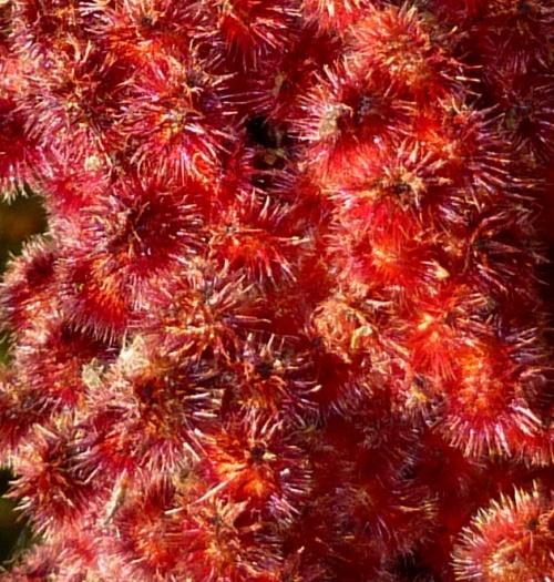 6. Sumac Berries