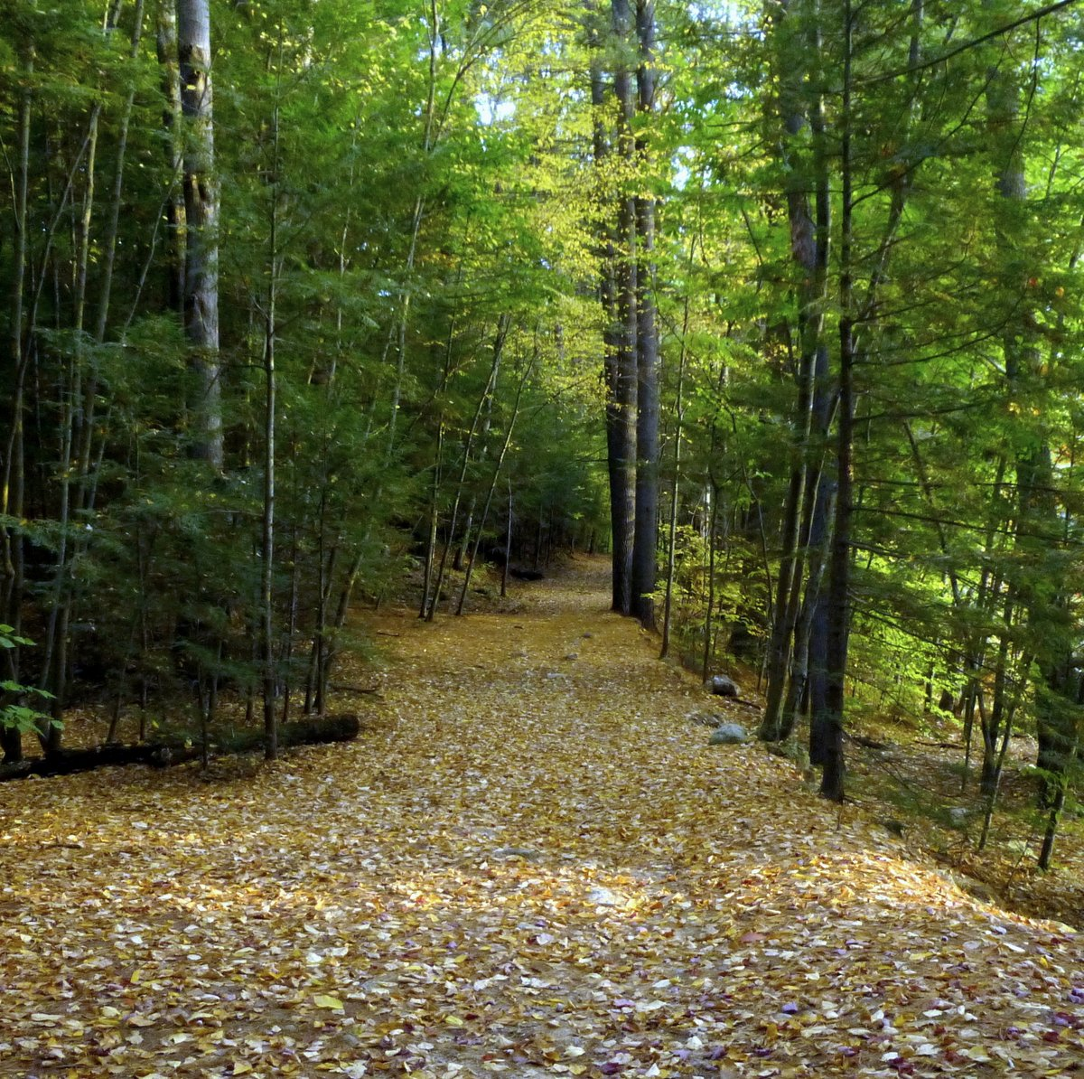 7. Forest Path