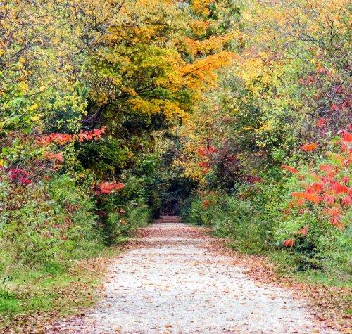 8. Rail Trail