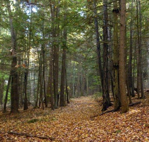8. Trail