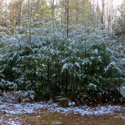 1. First Snow