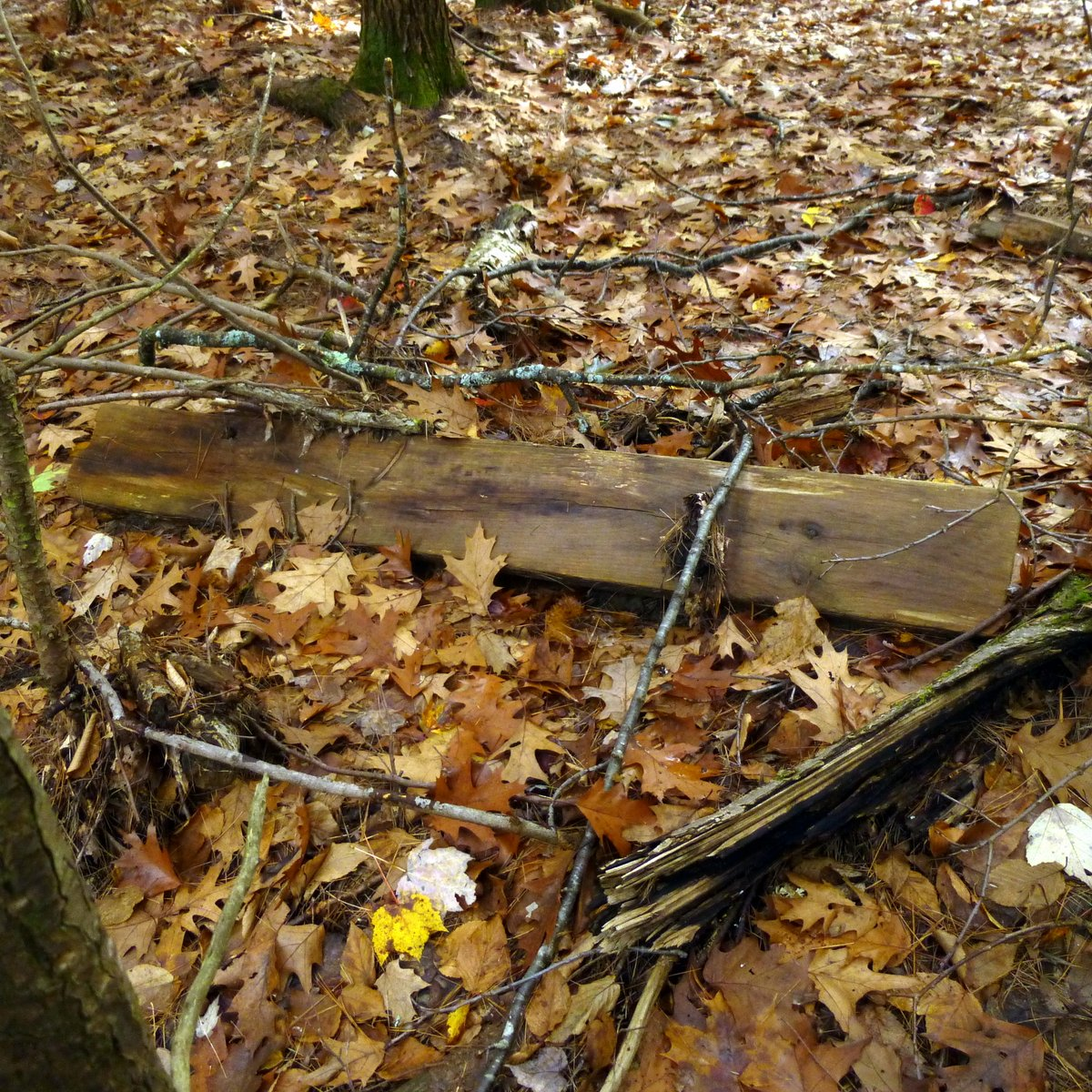 10. Board in Woods