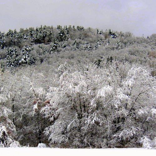 11. Snowy Hillside