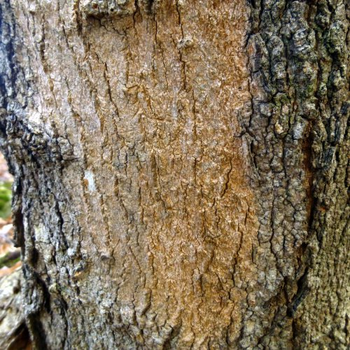 12. Pink Stain on Tree Bark