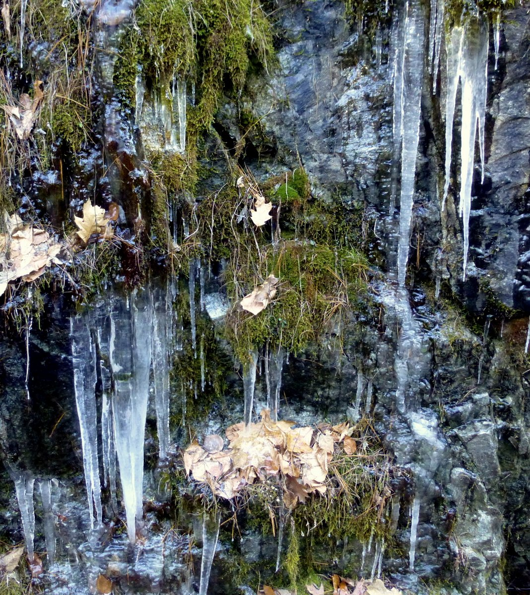 14. Ice Covered Moss