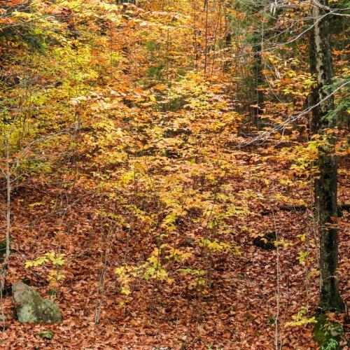 15. Foliage
