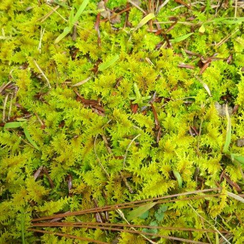 15. Lime Green Moss