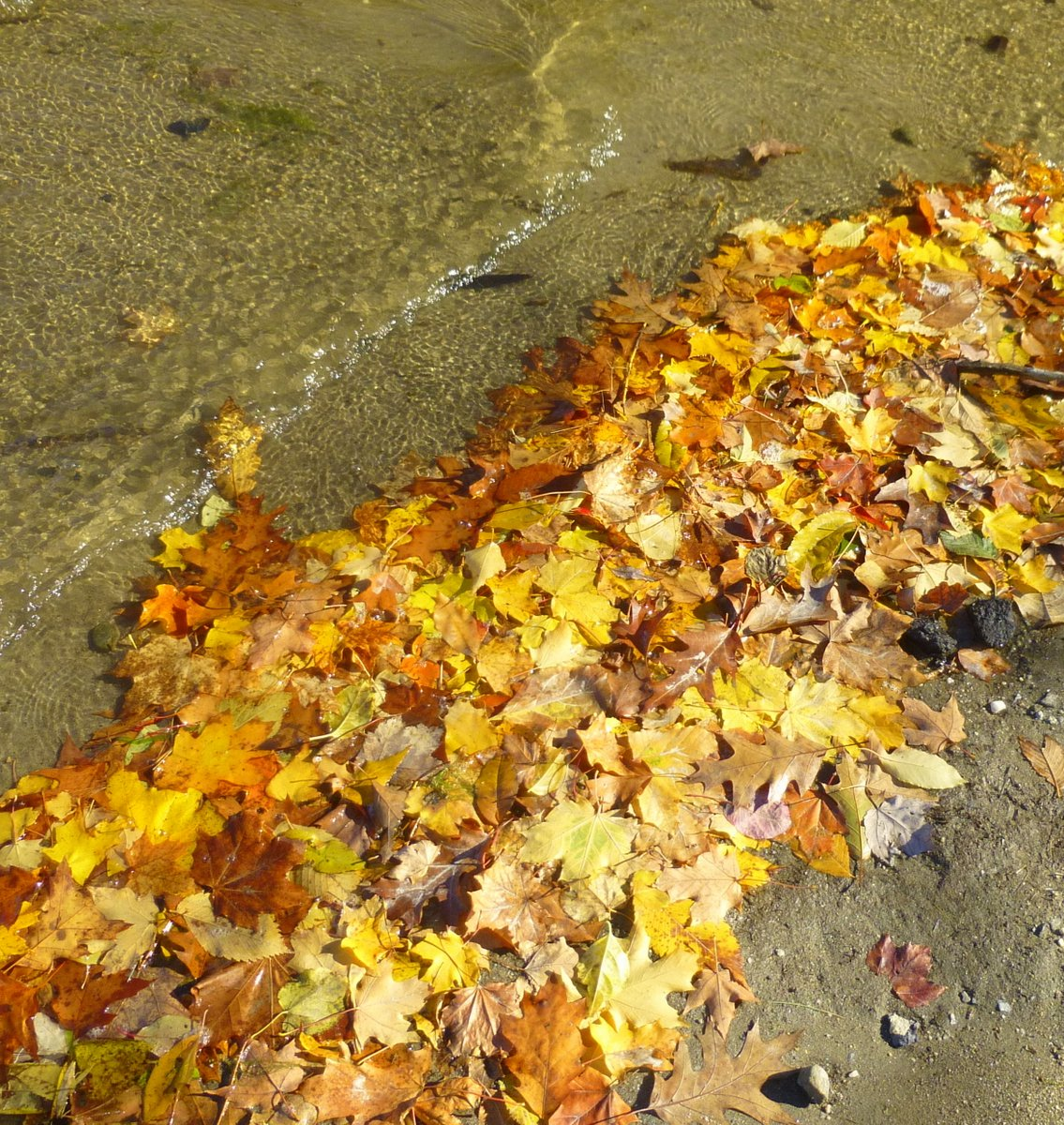 15. Washed Up Leaves