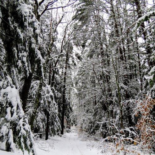 4. Snowy Trail-2