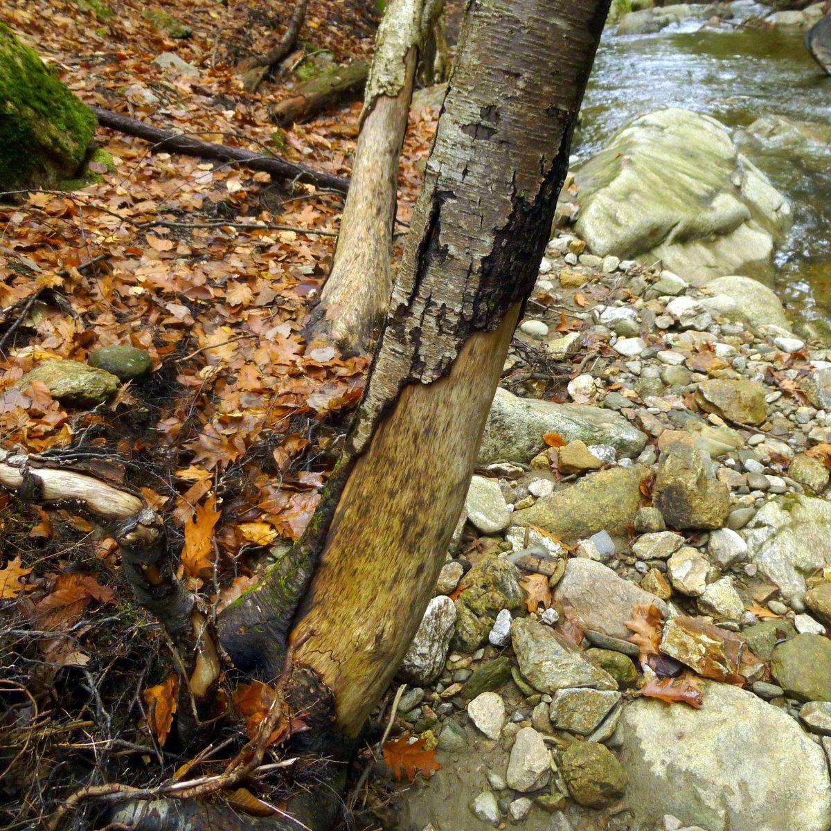 9. Damaged Trees