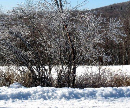 1. Icy Roadside Shrubs