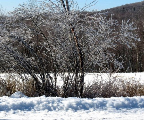 1. Icy Roadside Shrubs