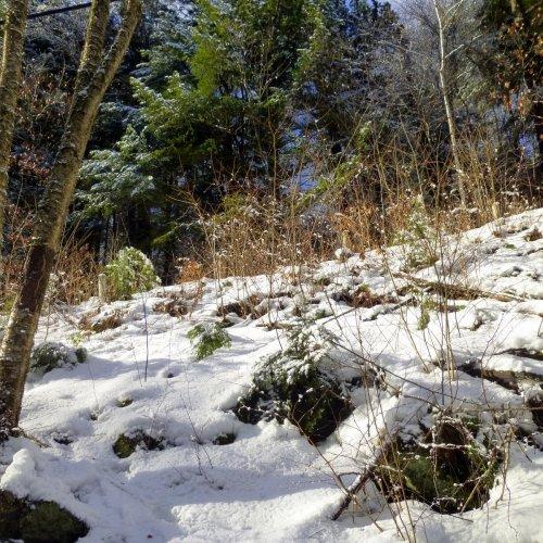 12. Beaver Brook Falls Climb
