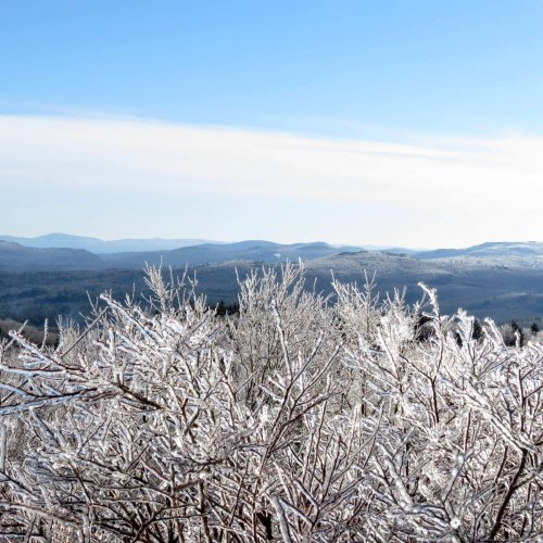 12. Icy Blueberry Bush