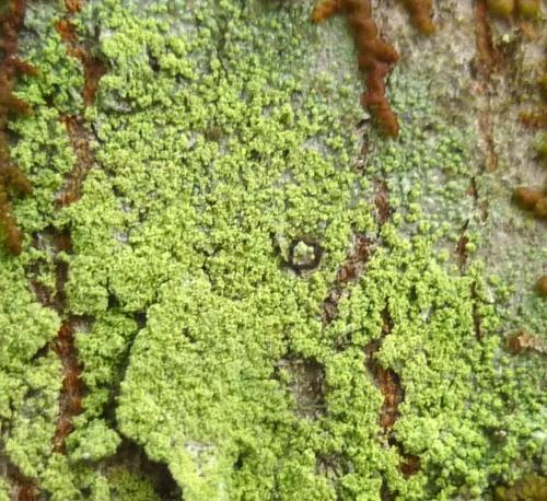 12. Lichen Number Six