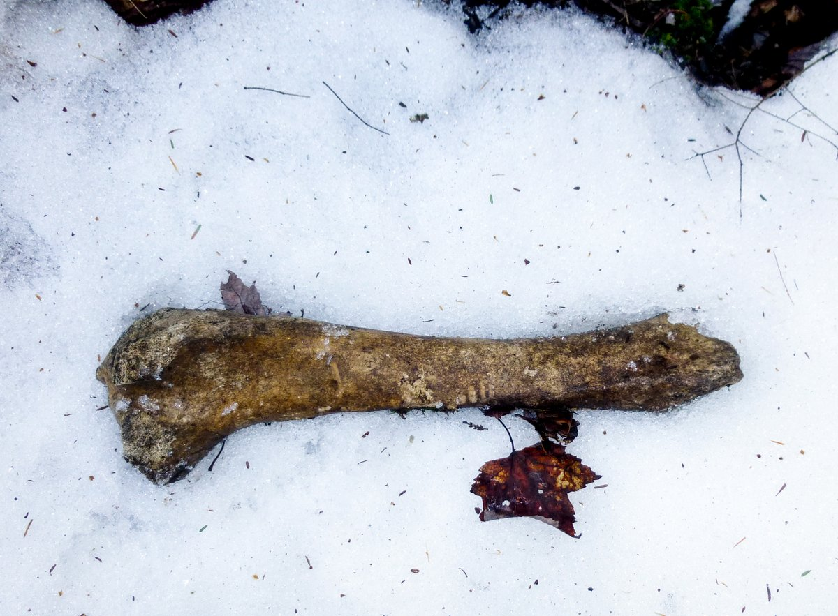 14. Bone