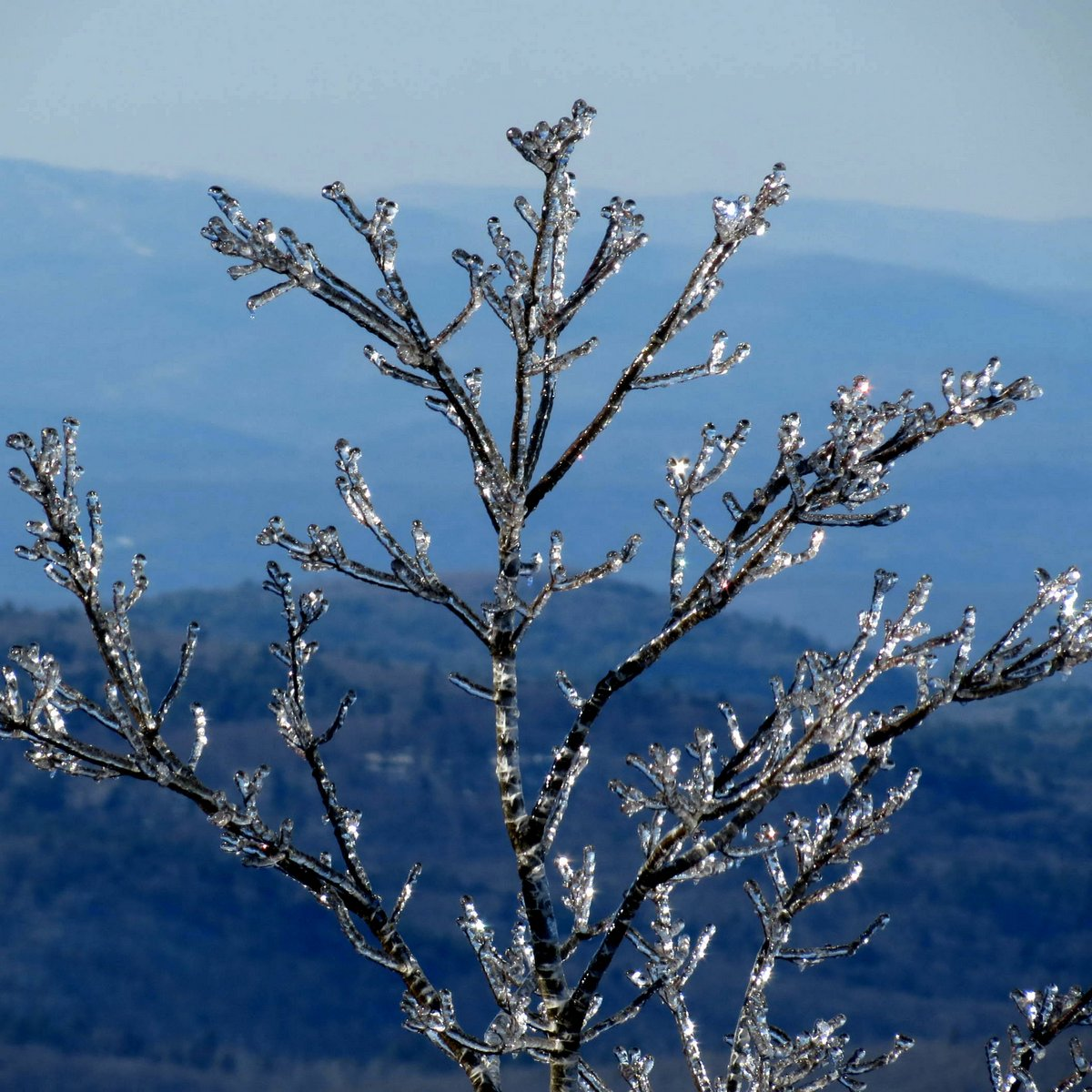 14. Ice Covered Tree