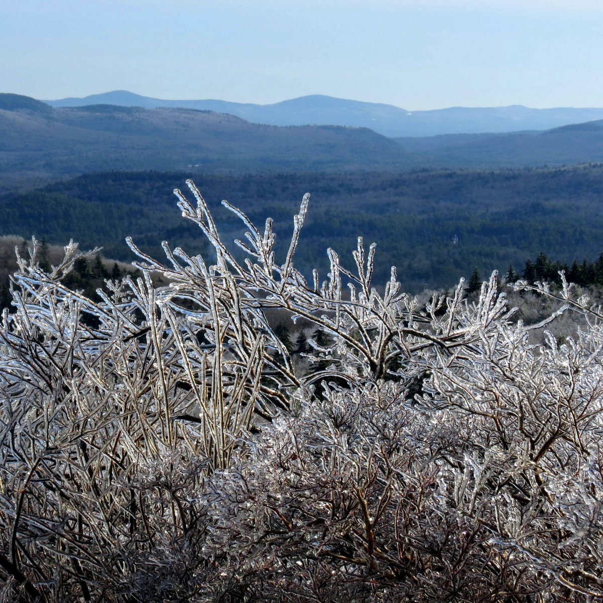 15. Icy Blueberry Bush